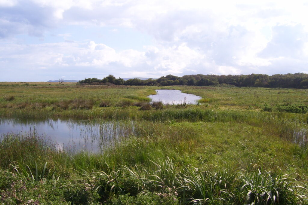 Blackditch Wetland